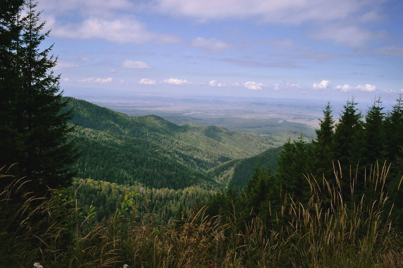 Adventure Beauty In Nature Bike Bikeride Biketouring Biketrip Cloud - Sky Discoverplaces Distant Forest Landscape Mountain Mountain Range Mountainview Nature Outdoors Romania Scenics Sky Tranquil Scene Tranquility Transfagarasanhighway Transfagaraşan Travel Woods