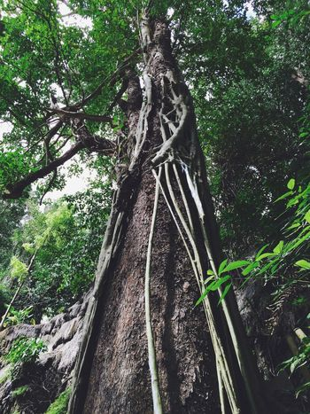 Tree Nature Forest Outdoors No People Thailand Holiday Storyformylife