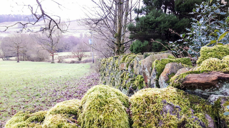 Mossy Wall Moss Mytholmroyd Fields Dry Stone Wall Countryside Yorkshire