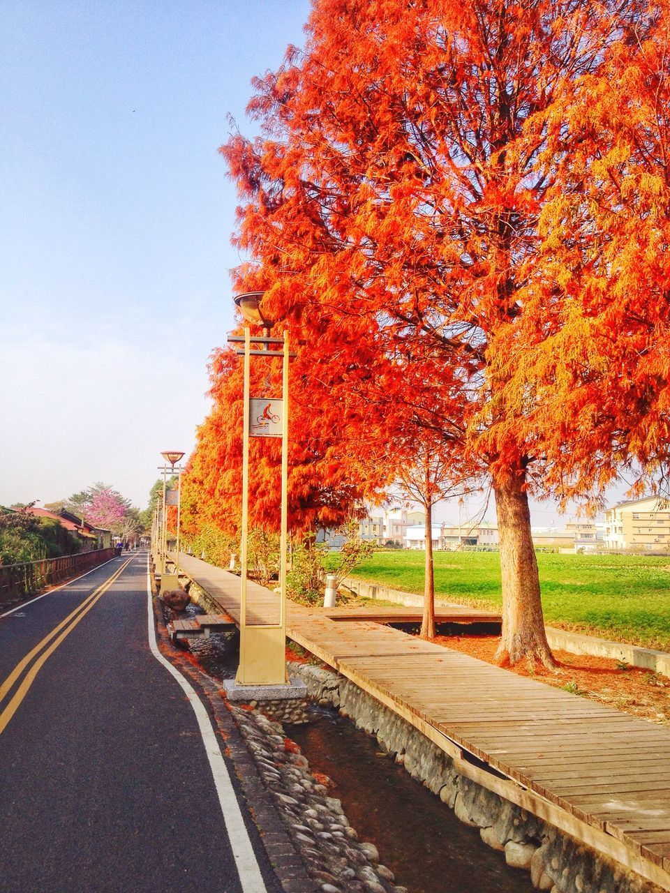 tree, transportation, autumn, road, the way forward, change, car, street, season, land vehicle, clear sky, built structure, mode of transport, orange color, diminishing perspective, day, building exterior, growth, outdoors, city