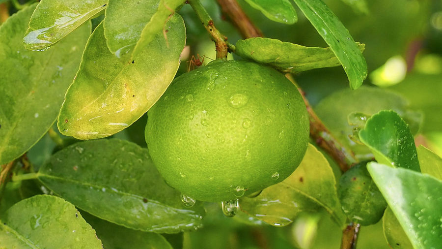 Close-up of water drops on fruit