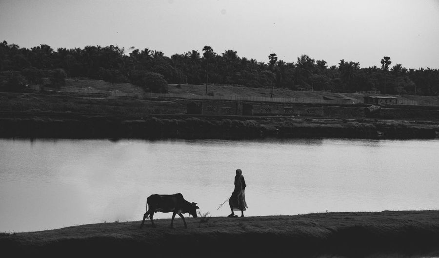 Meeting Old But Awesome Shade Of Grey Beautuful♥ Beauty In Nature Black And White Clear Sky Domestic Animals Full Length Livestock Mammal Nature Rural Landscape Rural Living Rural Scene Scenery Two People Water