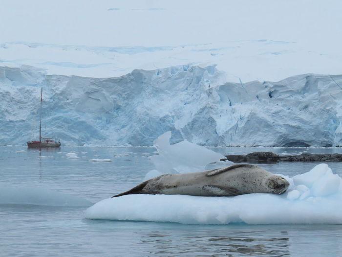 Seal lying on iceberg in sea