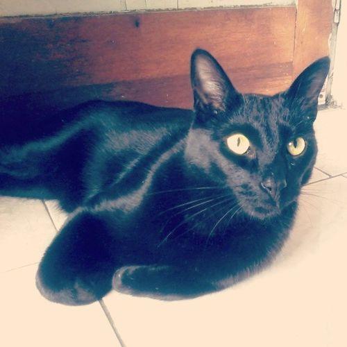 Cat Plumitas