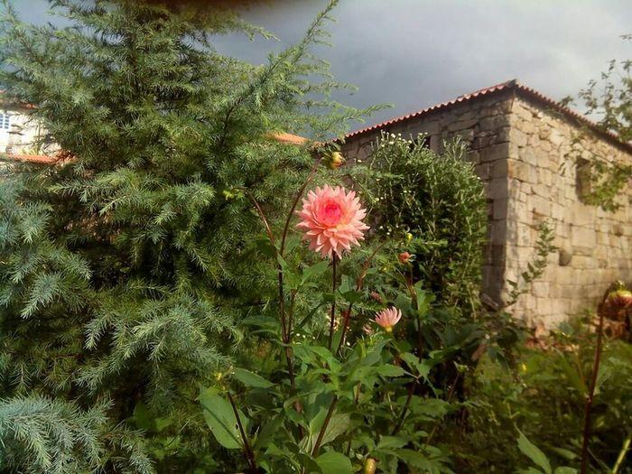 Gloria's flower Flower Flower Spain