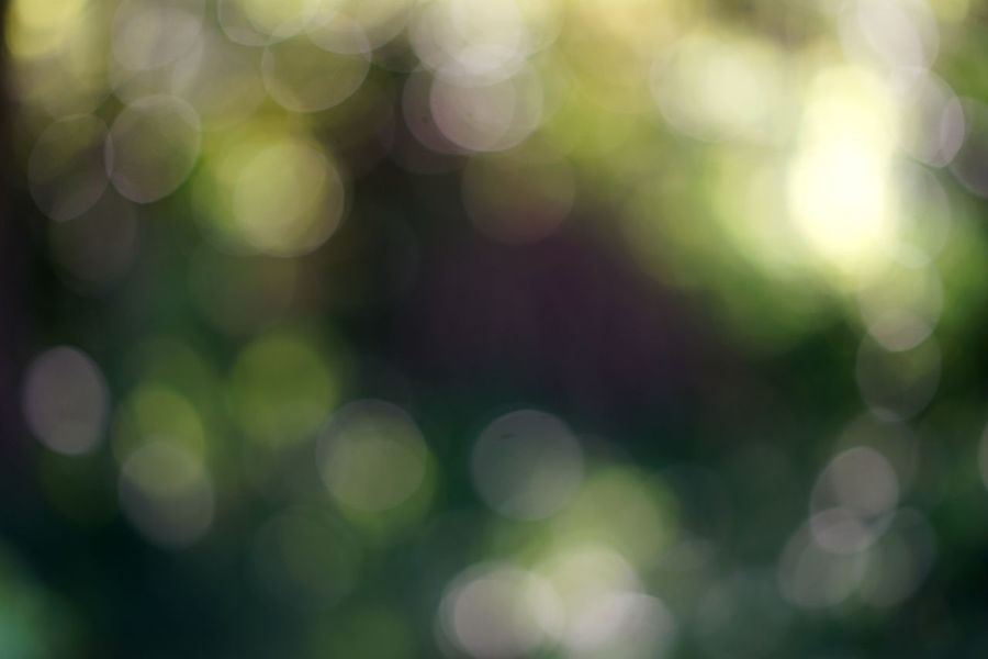 Dappled Shadow Summer Sunlight Purple Color Green Color Yellow Color Morning Bokeh Background Bokeh Garden Defocused Backgrounds Abstract No People Pattern Illuminated Light - Natural Phenomenon Outdoors Abstract Backgrounds Lens Flare Spotted Full Frame Glowing Green Color Nature