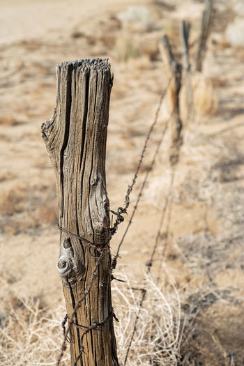 wood post fence and barbed wire in desert of California Wood - Material No People Focus On Foreground Land Nature Plant Day Close-up Outdoors Dry Post Wooden Post Dead Plant Textured  Tranquility Desert Field Tree Trunk Wood Climate Arid Climate Bark Desert Fence Winter Season