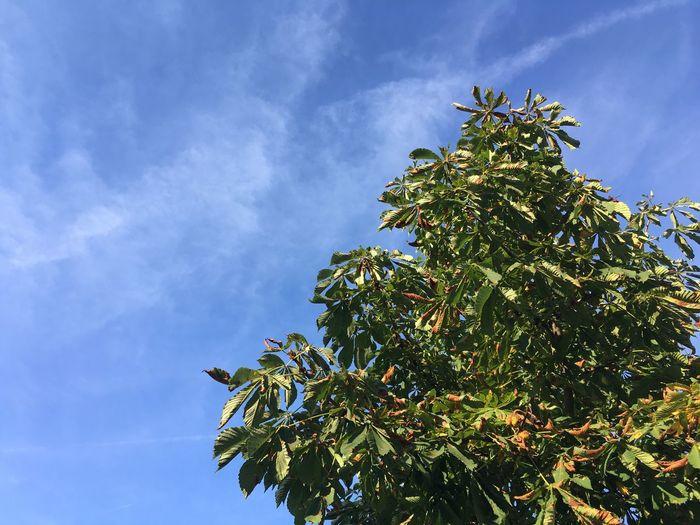 Tree Blue Sky Tree And Blue Sky Bavaria