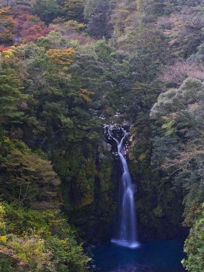 Autumn colored waterfall. Simple Quiet Love Japan Shizuoka M.ZUIKO DIGITAL Lumix G9 Green Color Scenics - Nature Scenics EyeEm Nature Lover EyeEmNewHere EyeEm Best Shots Long Exposure Water No People Day Outdoors Autumn Tranquil Scene Tranquility Beauty In Nature Nature Waterfall