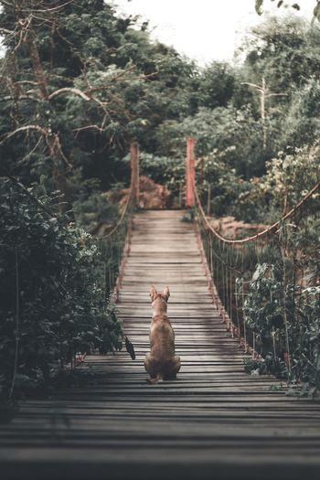 View of a cat on bridge