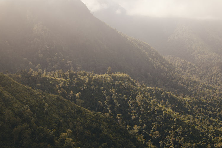 High angle view of trees and mountains during foggy weather