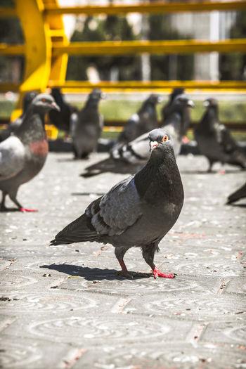 Pigeons perching on a bird