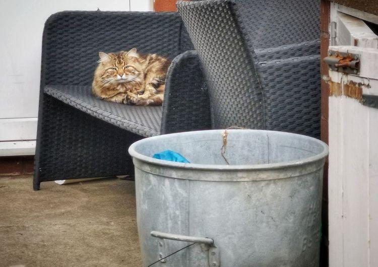 Portrait of a cat hiding behind seat