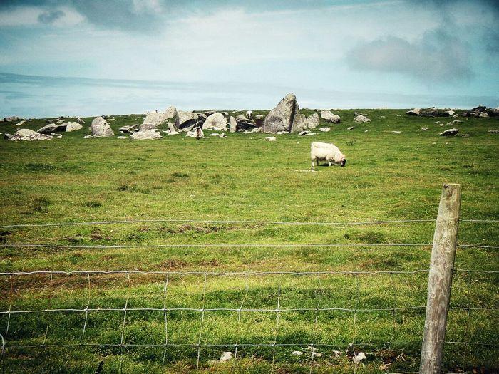 Northern Ireland Eyeem Ireland Landscape Dingle Peninsula EyeEm Best Shots Eyeem Northern Ireland The Adventure Handbook Cgk Photography Nature Photography Ireland Eyem Best Shots Travel