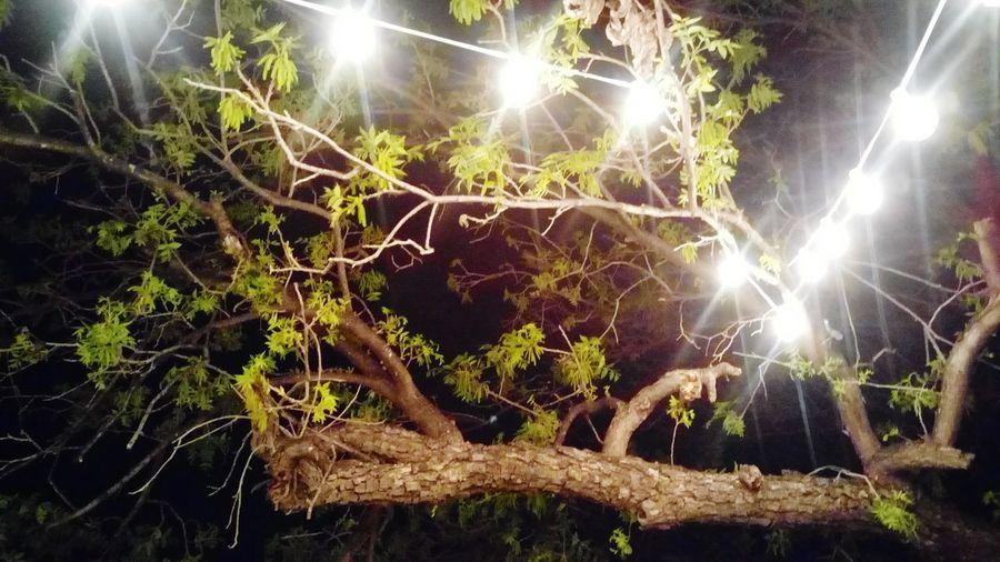 Illuminated Night Outdoors No People