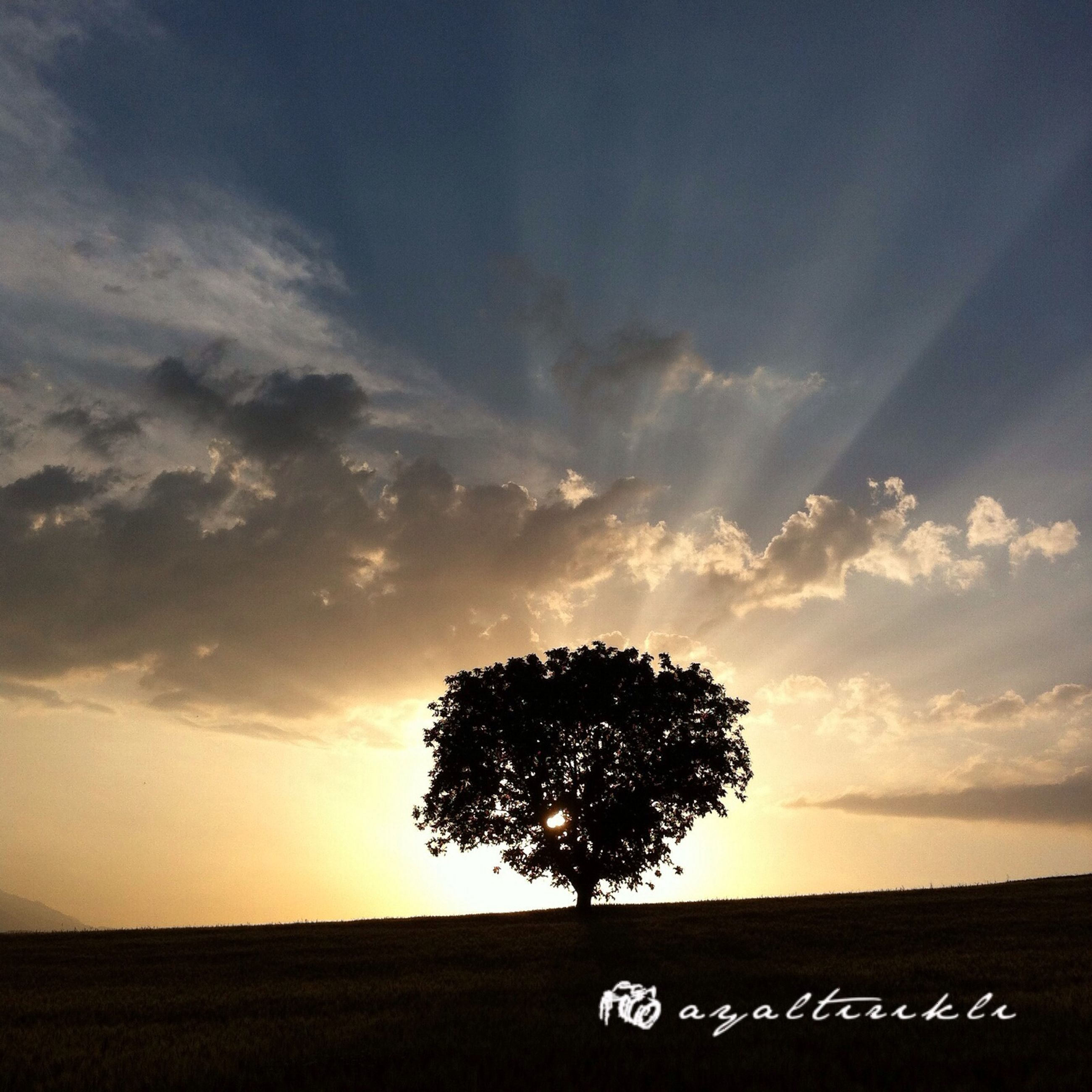 sunset, silhouette, sky, tree, tranquility, tranquil scene, scenics, beauty in nature, landscape, nature, field, cloud - sky, idyllic, growth, cloud, outdoors, non-urban scene, no people, sunlight, remote