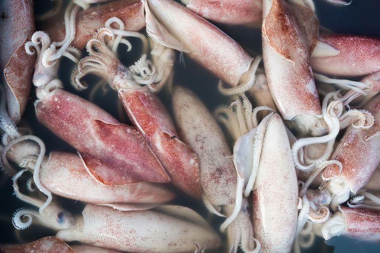 Full frame shot of squid for sale
