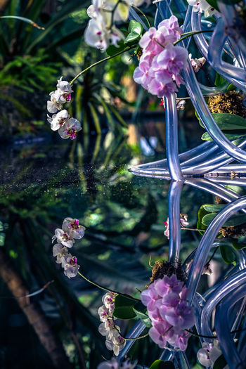 Orchid Reflection Orchid Reflection Beauty In Nature Blossom Flower Flowering Plant Focus On Foreground Freshness Nature No People Plant Purple Spring