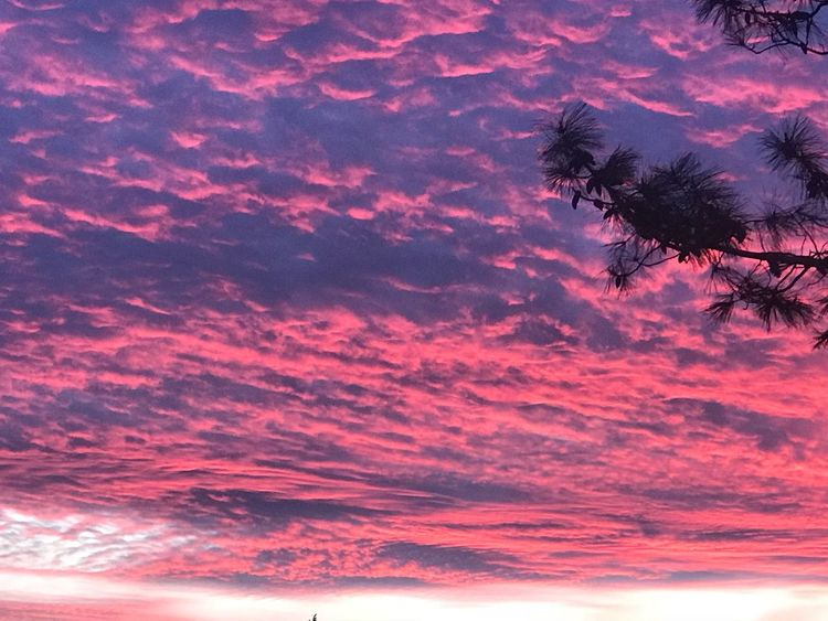 Like a red sea Beauty In Nature Pink Color Sunset Tree Sky Cloud - Sky Plant Scenics - Nature No People Nature Tranquility Dramatic Sky Tranquil Scene Idyllic Backgrounds Outdoors Magenta Tropical Climate Silhouette Palm Tree