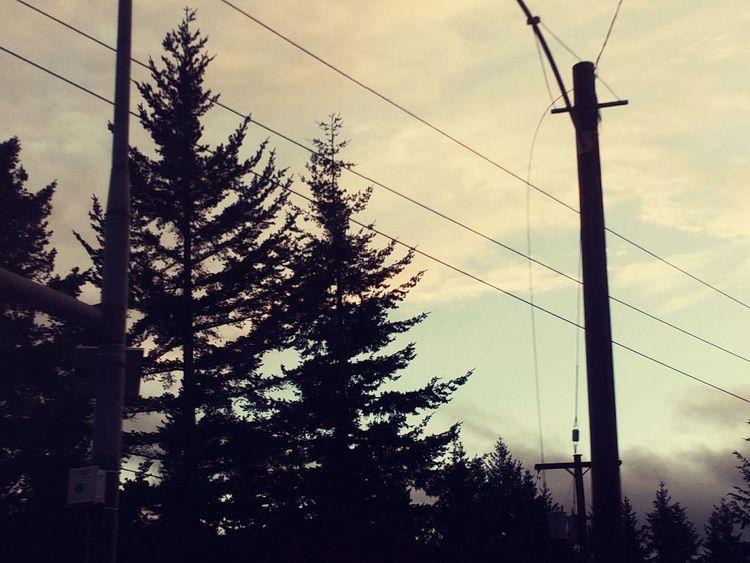 Trees Landlines Onadrive Beautiful Sky
