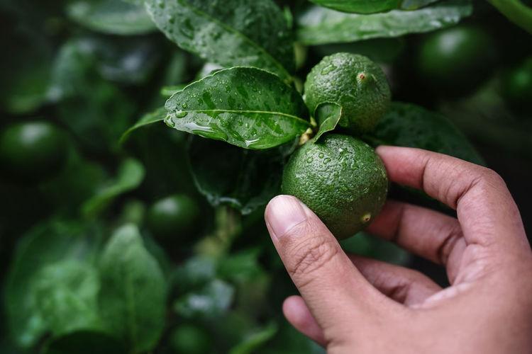 Close-up of hand holding lemon fruit outdoors