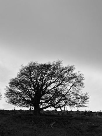 Landscape Tree Tranquil Scene Beauty In Nature No People Non-urban Scene Sky Nature Tree Trunk Black & White Blackandwhite Photography TakeoverContrast Finding New Frontiers Miles Away Ushuaia Argentina Ushuaia Tierradelfuego Ushuaia Arg. EyeEmNewHere Art Is Everywhere The Great Outdoors - 2017 EyeEm Awards Place Of Heart EyeEm Selects Perspectives On Nature