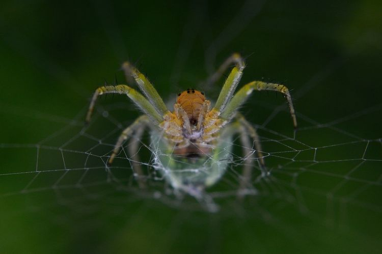 The Spider Animal Animal Body Part Animal Leg Animal Themes Animal Wildlife Animals In The Wild Arachnid Arthropod Close-up Fragility Insect Invertebrate Nature No People One Animal Outdoors Selective Focus Spider Spider Web Vulnerability  Web Zoology