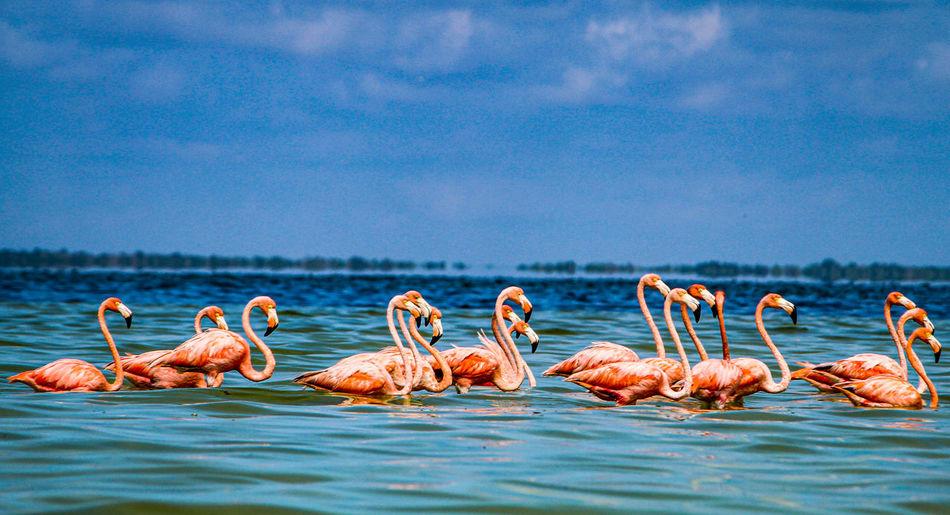 Flock of birds in sea against blue sky