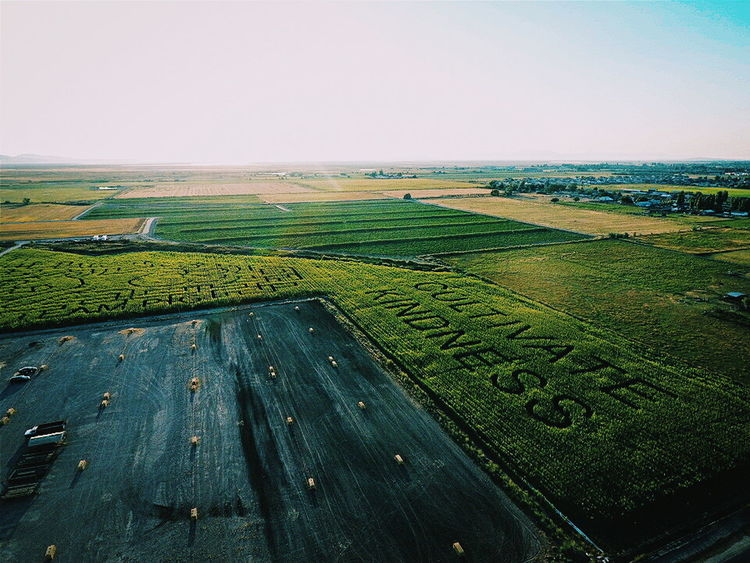 Landscape Clear Sky Tranquil Scene Field Rural Scene Scenics Agriculture Farm Tranquility Horizon Over Land Beauty In Nature Sea Water Nature Green Color Outdoors Day Horizon Sky Non-urban Scene Drone  Dronephotography Drone Moments Drones Droneporn