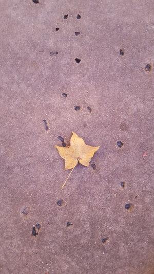 Hello Star! Leaf Leaf 🍂 Leaf On Ground Leaf On Pavement