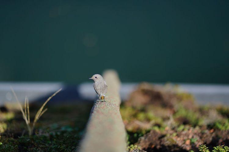 Close-up of a bird against calm sea