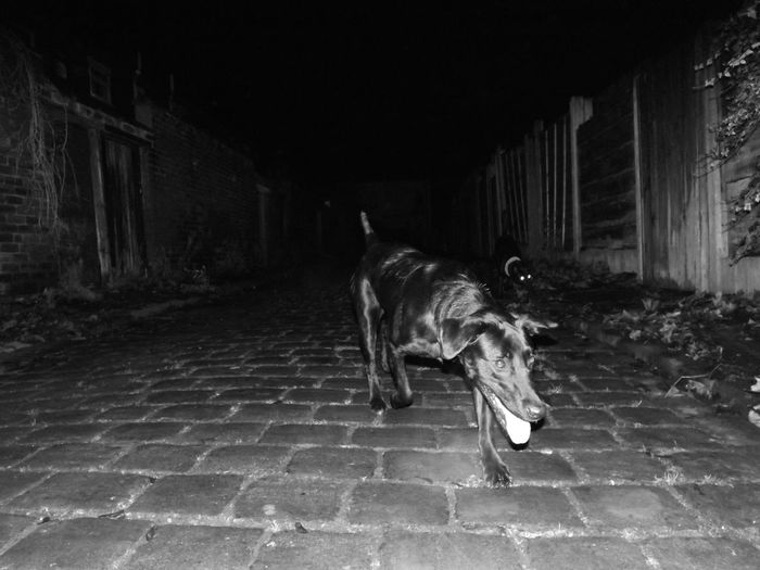 Late night walkies Streetphoto_bw Playing With The Animals Hound Kallie