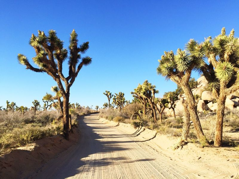 Always take the dusty road 👌 Check This Out Hanging Out Road Trip Nature Wanderlust Adventure Travel On The Road Exploring California Southern California Desert Joshua Tree Dirt Road Dusty Wide Open Spaces Kiomi Collection