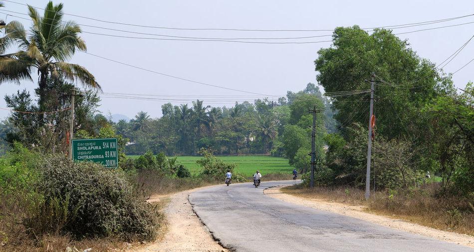 People walking on road by trees against sky