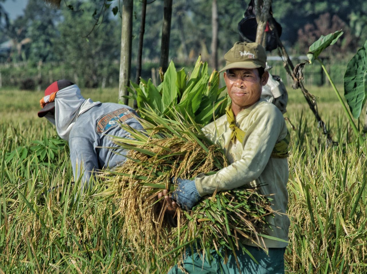 agriculture, one man only, only men, field, crop, farm, mature adult, adults only, one person, farmer, growth, one mature man only, mature men, adult, outdoors, working, men, portrait, looking at camera, rural scene, day, nature, occupation, people, farm worker, food, smiling