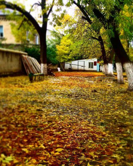 Золотая осень. листьяжелтые