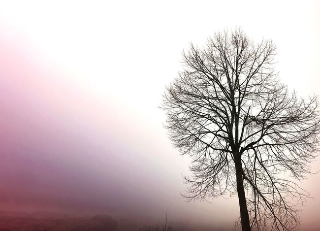 Branch Tranquility Tree Lone Isolated Tranquil Scene Beauty In Nature Landscape Nature
