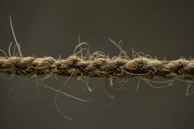 Close-up of rope against black background