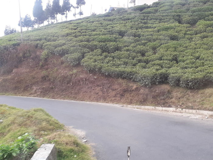 Road by trees on hill