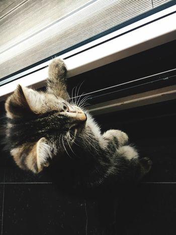 Kitten Mammal Animal Themes One Animal Animal Pets Domestic Cat Domestic Cat Day Resting
