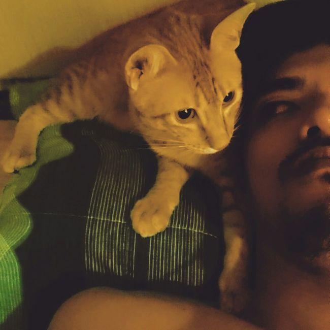 小鬼…很熱耶 Taking Photos Relaxing Enjoying Life IsMyLife Cat