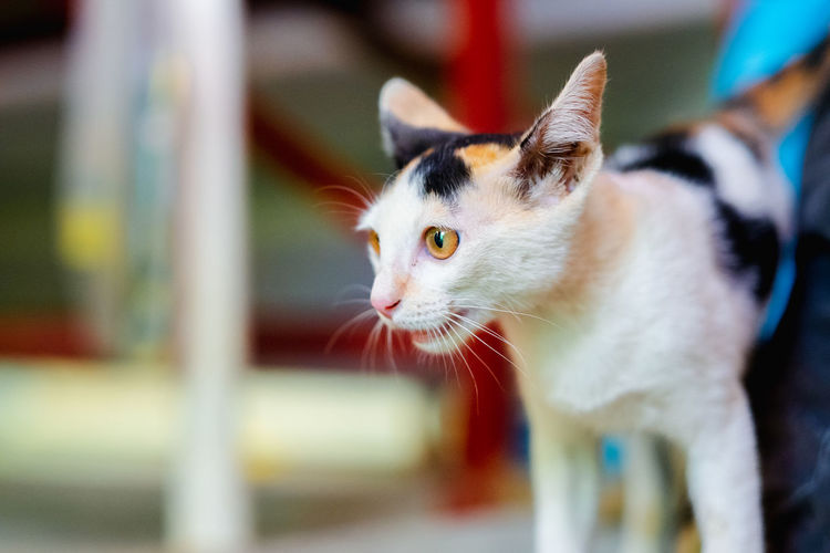 Cute baby kitten Small Tiny Domestic Animals Feral Cat Horizontal Young Adult Child Lonely Furry Looking At Camera Mammal Portrait Hungry Beautiful Breed Backgrounds EyeEm Best Shots Alone Funny Stray Animal Adorable Animal Cute Cat Kitten