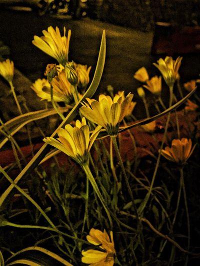 Flowers Yellow Grunge