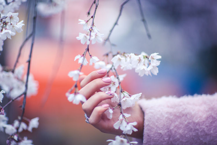Blossom Close-up Flower Hanami Human Body Part Human Hand Japan Japan Photography Kyoto No People Outdoors People Petal Real People Sakura Spring