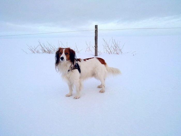 ..kiwi.. My Dog Wintertime Winter Capturing Freedom Freedom