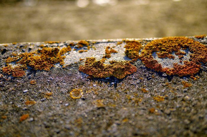 moss Nikon Nikon D3200 Nikon 35mm Dx 1.8 Colour Yellow Yellow EyeEm Selects No People Day Outdoors Close-up Nature
