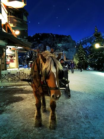 Christmas Time Best Christmas Lights It's Cold Outside Christmastime Christmas Around The World Merry Christmas Night Lights Nightphotography Avoriaz Fairytale  Magic Light And Shadow
