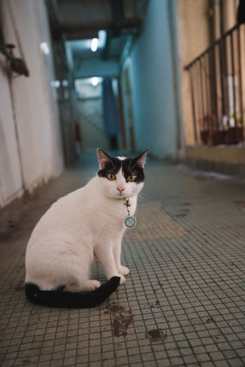 Cat EyeEm Selects Domestic Mammal One Animal Domestic Cat Cat No People Sitting Portrait
