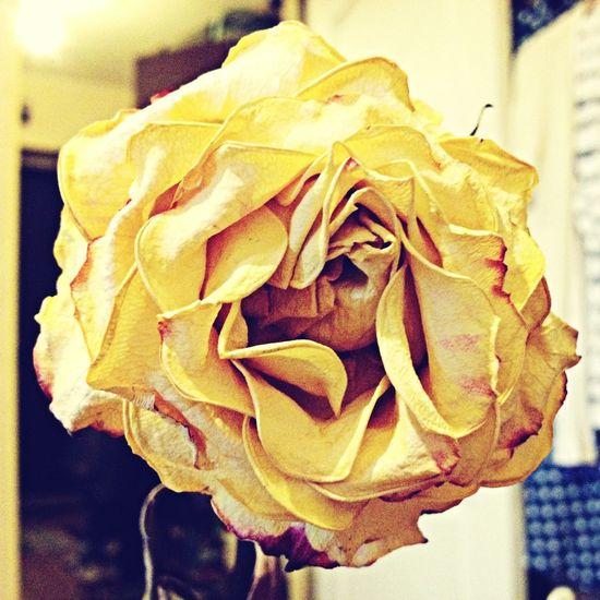 Роза с 24 марта?