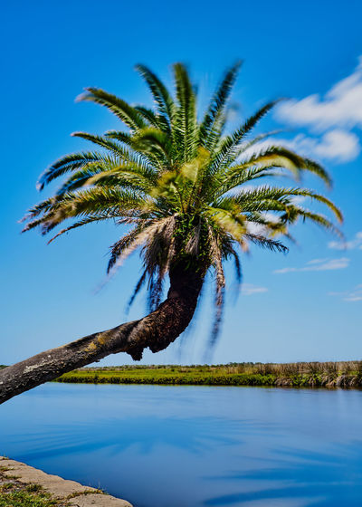 Bulow Creek State Park Art Photo Beauty In Nature Bulow Creek Cloud - Sky Day Film Look Film Lovers Florida Life Inspiration Lakeshore Longexposure Motion Photography Nature No People Ormond Beach Outdoor Photography Palm Tree Reflection Sky Tranquility Tree United States Vacation